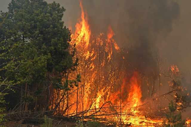 Житель Забайкалья сжег 600 га леса, разогревая еду на костре