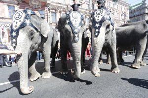 Слонам дадут выходной: гиганты не будут участвовать в шествии ко Дню города