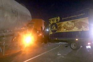 Ночью на Мурманском шоссе произошло массовое ДТП, погиб лось