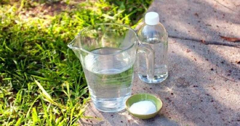 Обычная соль уничтожает все сорняки на огороде. Особый рецепт!