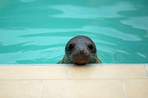 «Инь и Ян»: в Сети появилось новое видео отдыха тюленя и нерпы