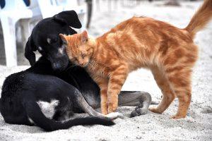 В России могут ограничить количество домашних животных в квартире