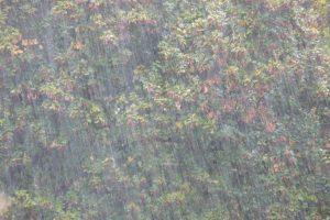 В Ленобласти в среду ожидаются ливни и грозы
