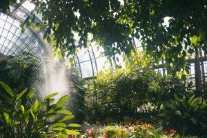 В оранжереях Таврического сада предлагают создать пространство для общественного досуга
