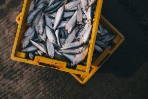 В Ленобласти изучат состояние экосистемы и рыбных запасов Ладоги