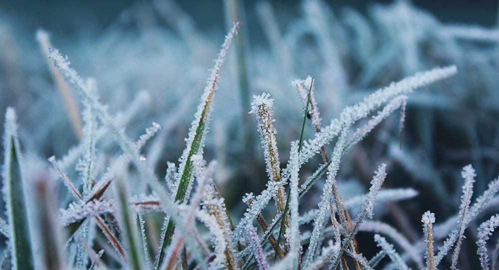 Воздух из Арктики принес в Россию небывалые июльские заморозки