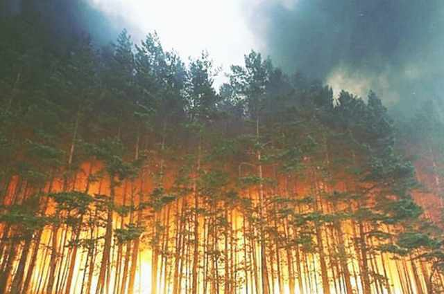 Красноярский губернатор назвал тушение лесных пожаров вредным