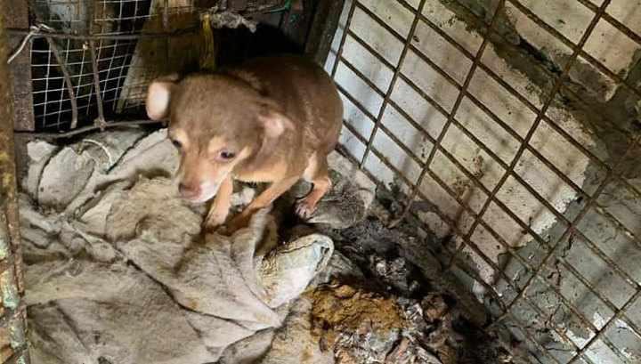 6-летняя девочка в Саратове жила на подпольной псарне