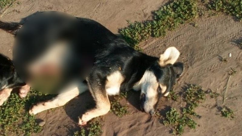 В Уфе мужчина изнасиловал собаку
