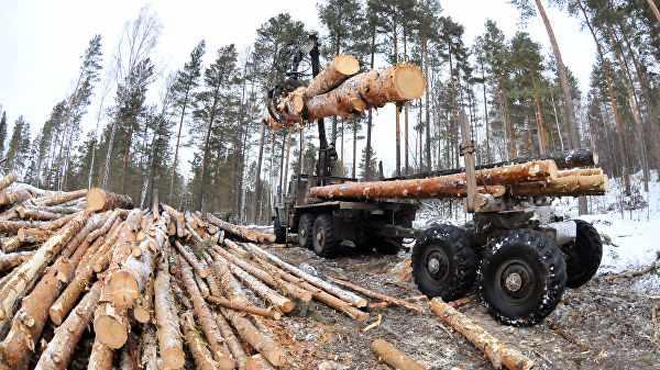 Стало известно, сколько гектаров леса Россия потеряла в 2018 году