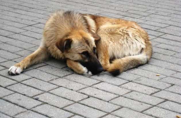 Собаки растерзали четырехлетнего ребенка в России