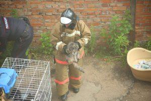 Петербургские спасатели вытащили из-под земли котёнка