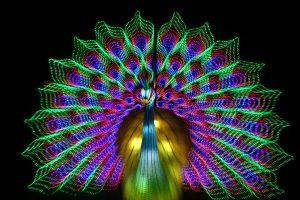 Свет — всему голова: на Крестовском острове открылся фестиваль гигантских китайских фонарей