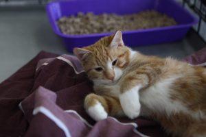 Петербуржцы спасли котёнка из канала Грибоедова