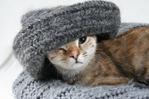 В Петербурге во вторник ожидаются прохлада и ветер