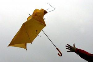 В выходные в Ленобласти будет дуть сильный ветер