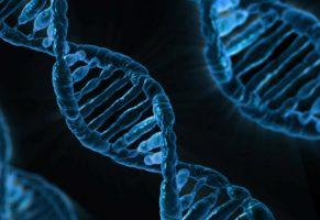 Генетики СПбГУ объяснили, почему ГМО не нужно бояться