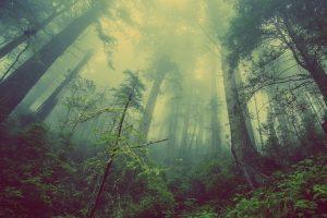 В Ленобласти обещают туман, ливень и сильный ветер