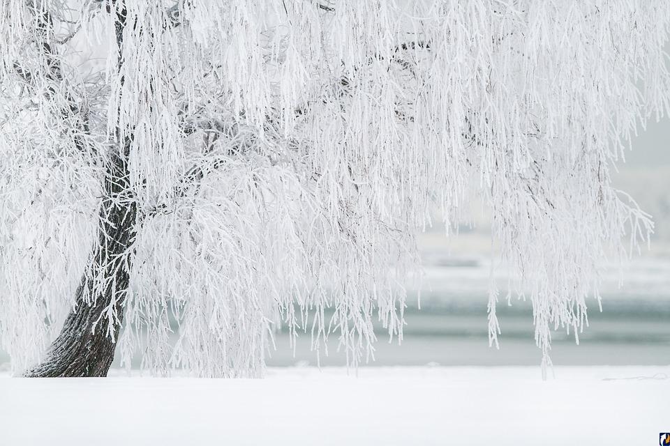 Гидрометцентр России: Климатическая зима наступит только с середины декабря