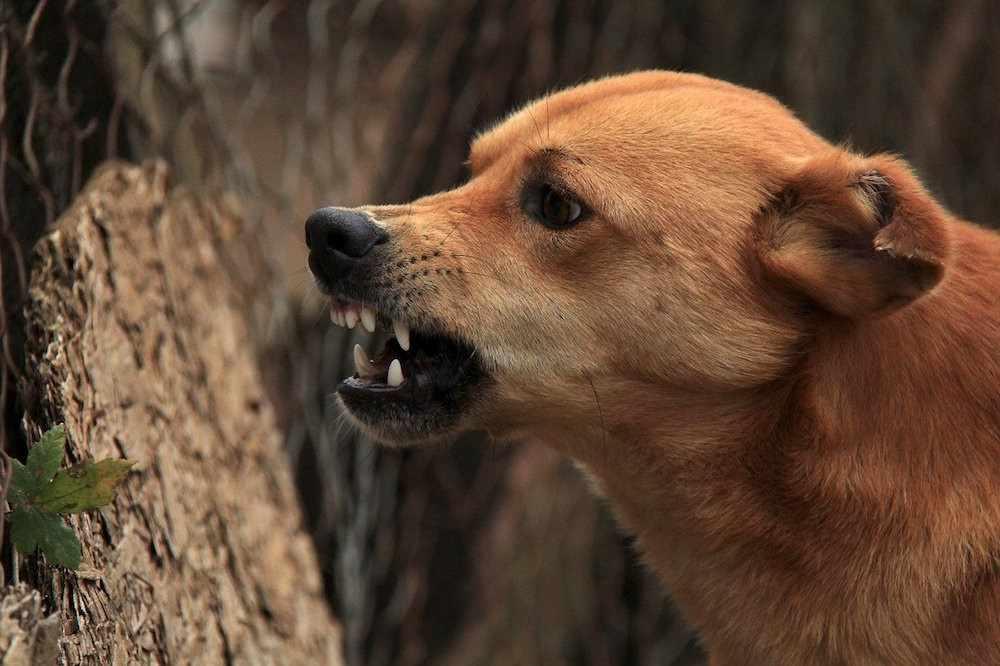 Кинолог рассказал, что делать при нападении собак