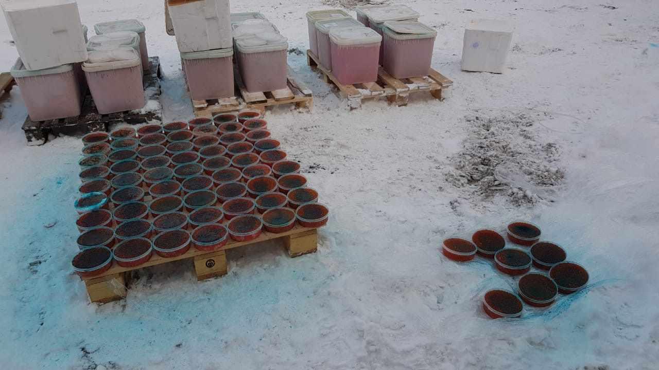 Почти пять тонн красной икры сожгли в Петербурге