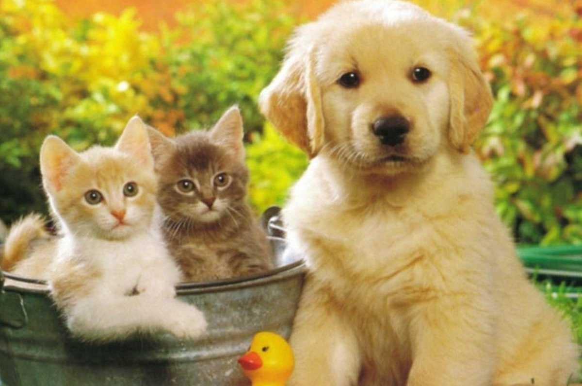 Владельцев животных ждут нововведения