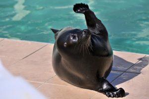 В центре «Спасение тюленей» рассказали о борьбе нерп с волнами