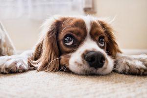 Петербуржцев заверили, что никто не собирается усыплять сторожевых собак «Водоканала»