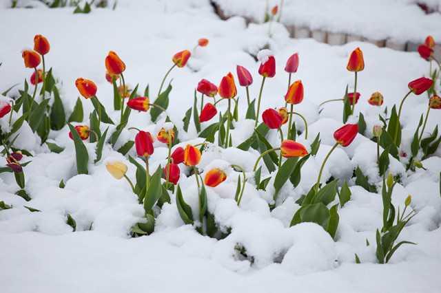 Гидрометцентр спрогнозировал погоду на март