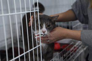 В Петербурге могут появиться государственные приюты для животных