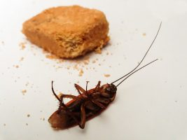 В Петербурге младенец отравился средством от тараканов