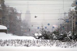 Жителей Ленобласти ждут снегопады и гололедица