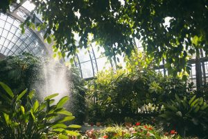 «Газпром» стал претендентом на реконструкцию теплиц Таврического сада