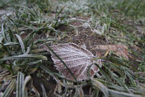 Ночью в понедельник в Ленобласти похолодает до -14 градусов