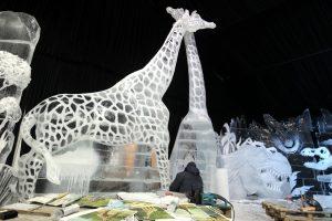 СМИ: В мире остался только один белый жираф