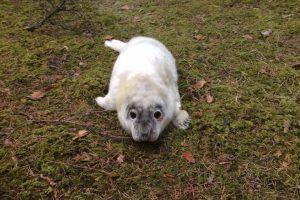 В центре «Спасение тюленей» рассказали о двух новых подопечных