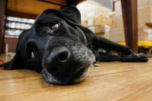 «Водоканал» просит депутатов защитить служебных собак
