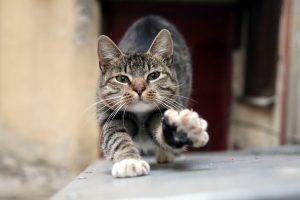 СМИ: Учёные выяснили, что COVID-19 может передаваться кошкам