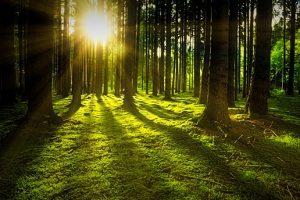 В Ленобласти выявили 758 нарушений порядка посещения лесов