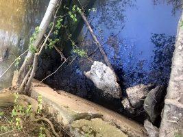 Росприроднадзор и Смольный ищут виновников загрязнения реки Оккервиль