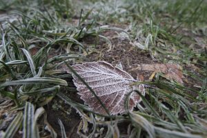 Синоптик: Май 2020 года в Петербурге попадёт в тройку самых холодных в XXI веке