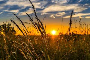 В воскресенье воздух в Ленобласти прогреется до +19 градусов