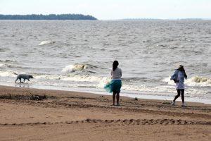 Жара радует и пугает петербуржцев: в городе начали активно размножаться водоросли