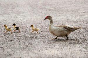 Петербуржцев попросили не кормить птиц