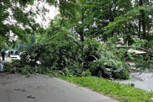 Прошедший шторм повалил несколько деревьев в Петербурге