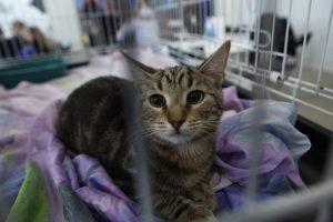 Петербургские IT-зоозащитники создали сервис для поиска животных из приютов