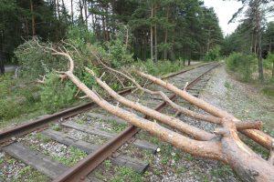 Комитет по благоустройству: ветер повалил 75 деревьев в городе