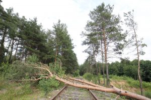 Из-за ветра в Петербурге закрыли сады и парки