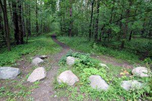 В природном заказнике «Сестрорецкое болото» открыли экотропу