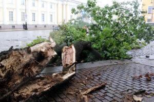 Из-за штормового ветра в Петербурге закрылись сады и парки